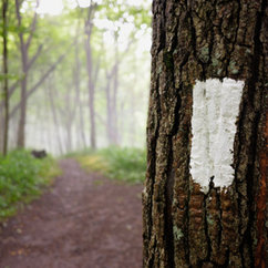 "Read MFA Alum Maura Kelly's Essay ""Finally Seeing the Forest for the Trees"""