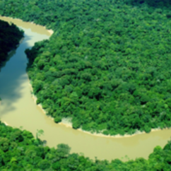 Have you ever wanted to go to the Amazon rainforest? Now is your chance!