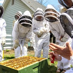 On Earth Day at Mason, a celebration of bees