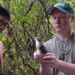 Smithsonian-Mason School of Conservation students visit the BBL's bird banding station
