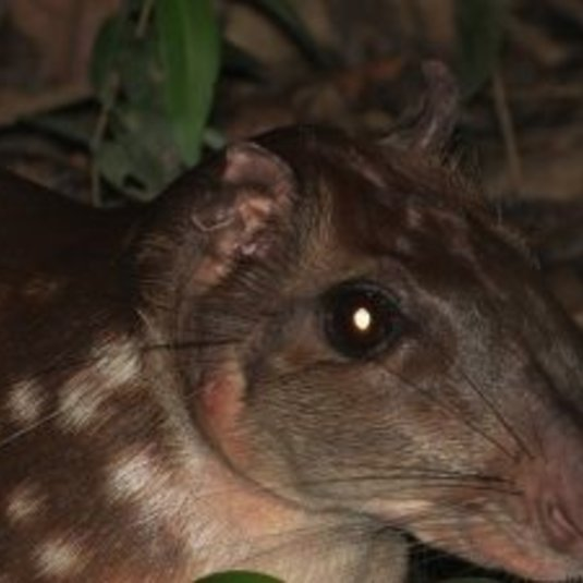 SIS faculty, Michael Gilmore, collaborated on an important new study focused on hunting and conservation in the tropics