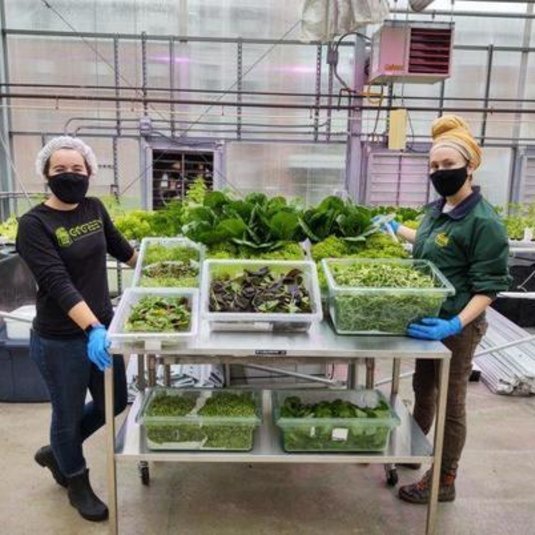 Greenhouse and Gardens program thriving despite COVID-19