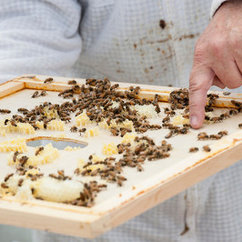 HiveStarter Initiative Aims to Sustain Honey Bees