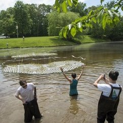 Students Launch Floating Wetlands on Mason Pond