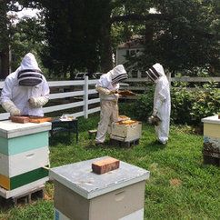 Mason Hives Abuzz with Research