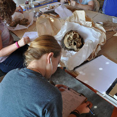 Anthropology students study 300 skeletal remains in Peru